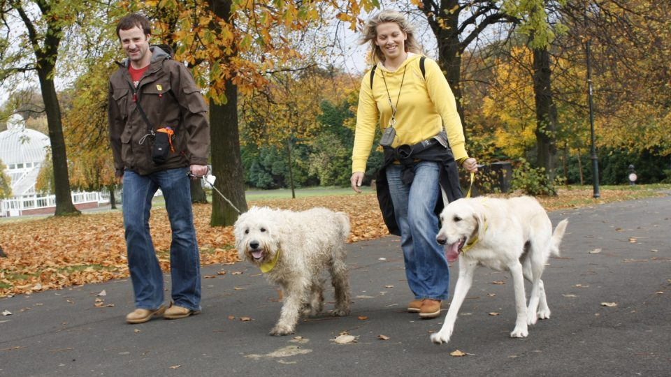A couple walking two, large dogs in a park in the fall.